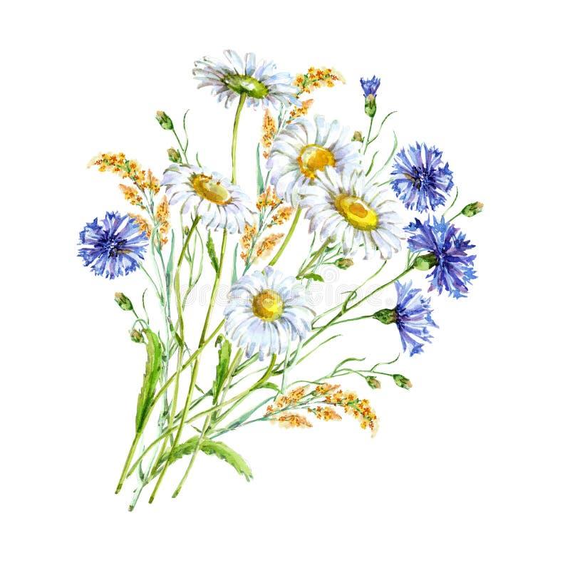 Bouquet chamomile blue wildflower watercolor vector illustration