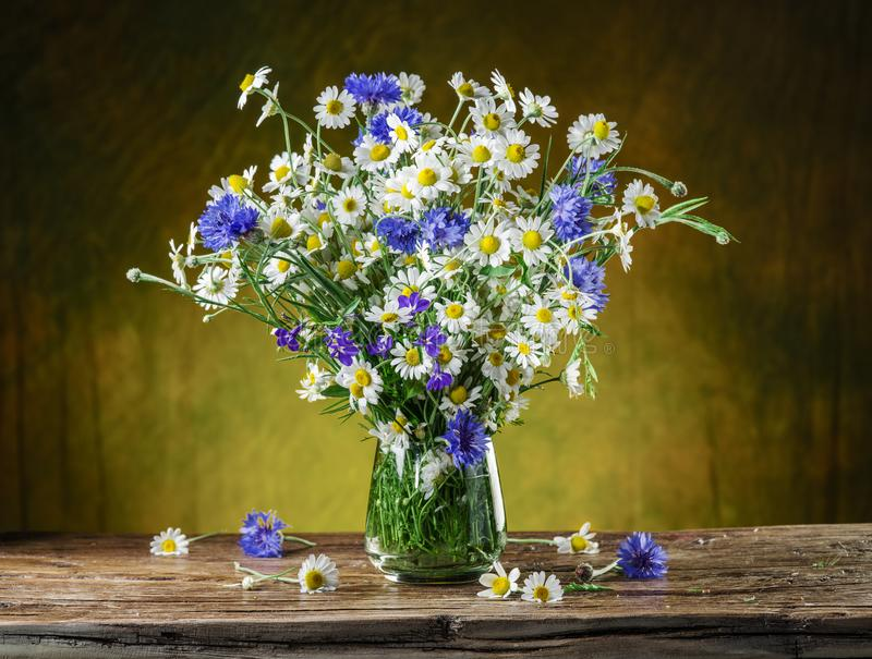 Bouquet of chamomiles. royalty free stock photos