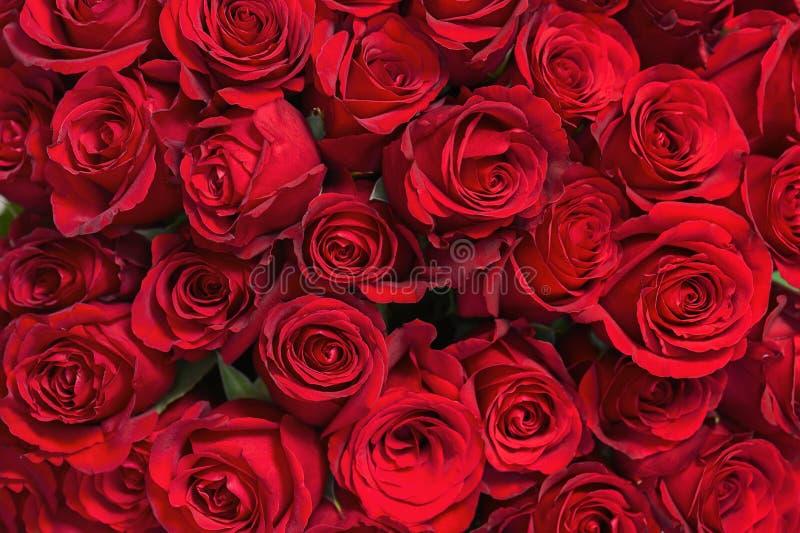Bouquet coloré de fleur des roses rouges pour l'usage comme fond image stock