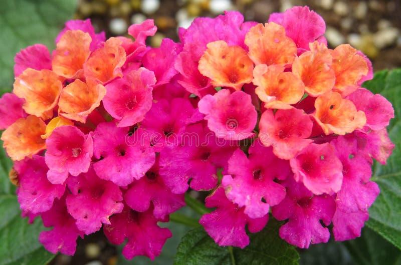 Bouquet coloré de ressort des fleurs dans un modèle géométrique images libres de droits