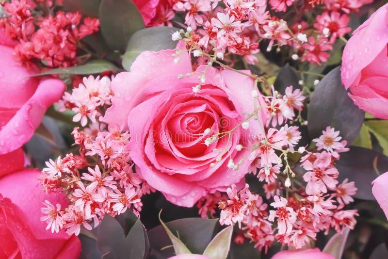 Bouquet coloré de vue supérieure des fleurs roses roses fleurissant avec la texture de baisses de l'eau pour le fond image libre de droits