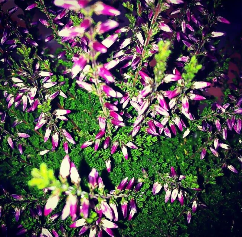 Bouquet coloré des fleurs image stock
