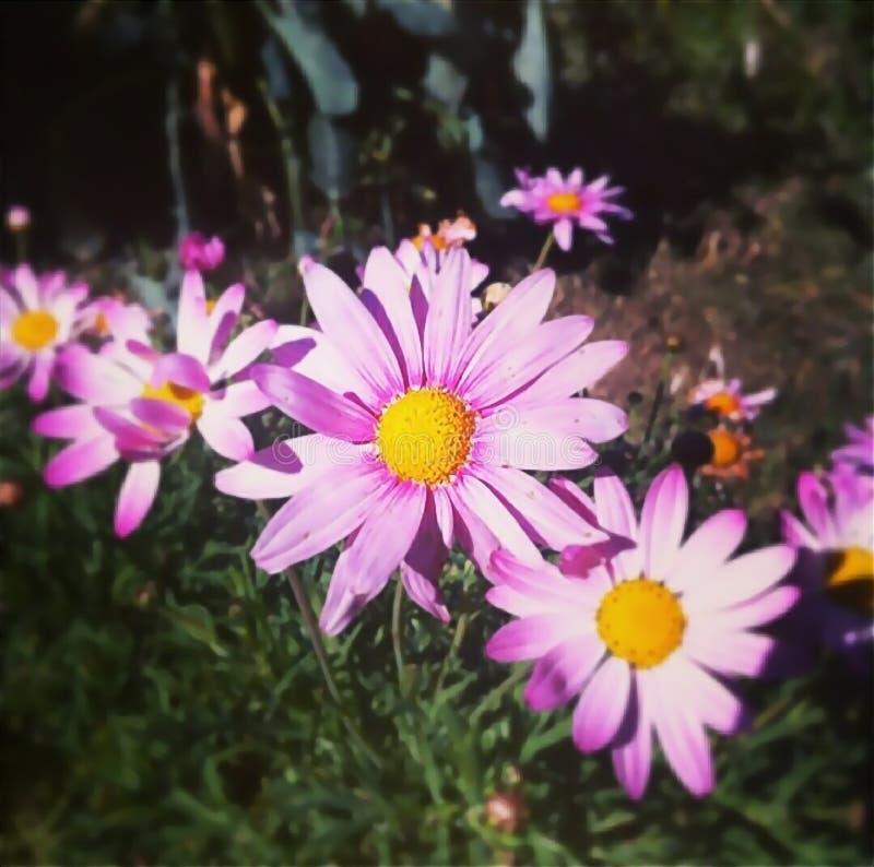 Bouquet coloré des fleurs images libres de droits