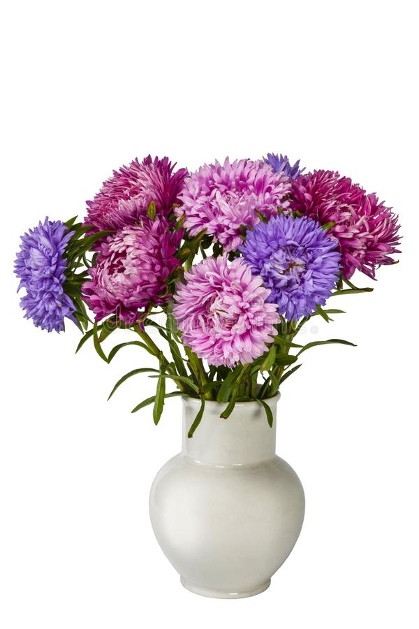 Bouquet of colorful bright asters in white ceramic vase on white background stock images