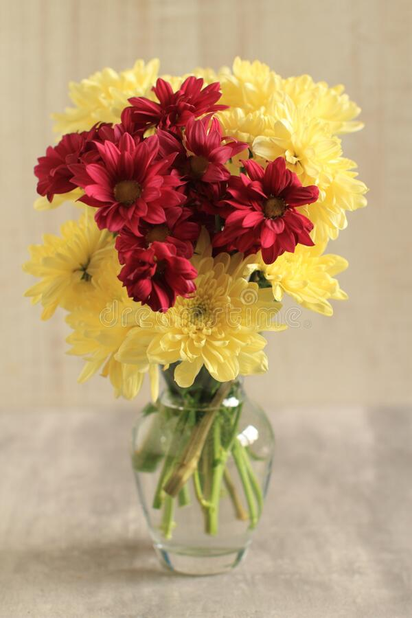 Bouquet of colorful mini chrysanthemum flowers in a vase on a table stock images