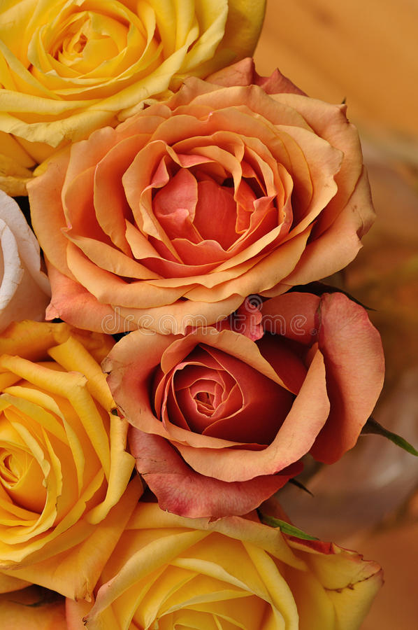 A bouquet of colorful roses royalty free stock photo