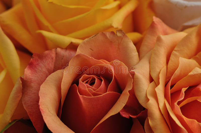 A bouquet of colorful roses stock photo