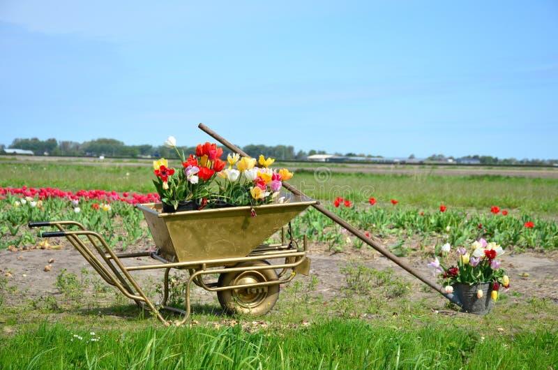 Bouquet of colorful tulips place into a metal wheelbarrow, Keukenhof-Netherlands royalty free stock photos