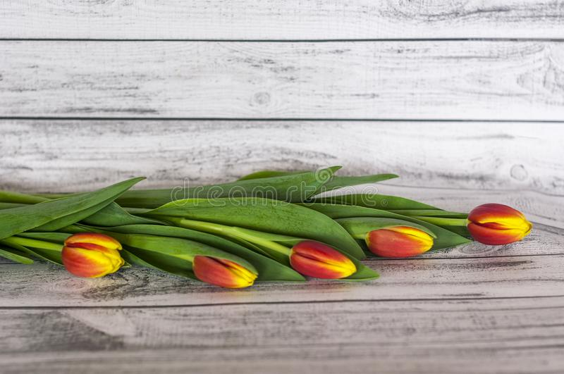 Background .Bouquet of colorful tulips on a wood stock photography