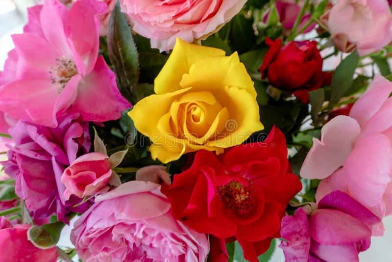 Bouquet of colorful yellow, pink and red roses in a vase. stock photography