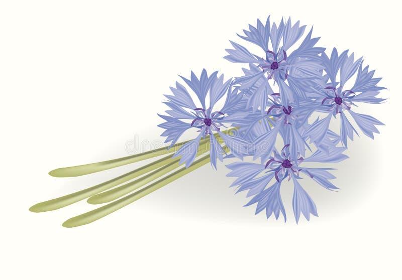 Bouquet of cornflowers stock illustration