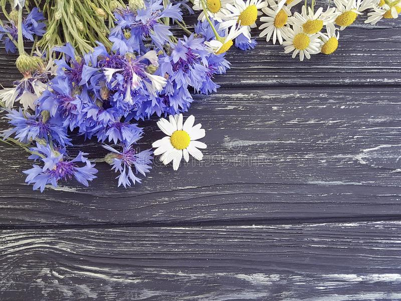 Bouquet of cornflowers, border daisy fresh petal natural chamomile on a black wooden background beauty stock photography