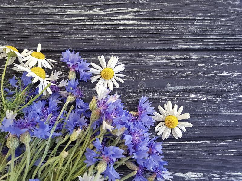 Bouquet of cornflowers, border fresh petal natural chamomile on a black wooden background beauty stock photos