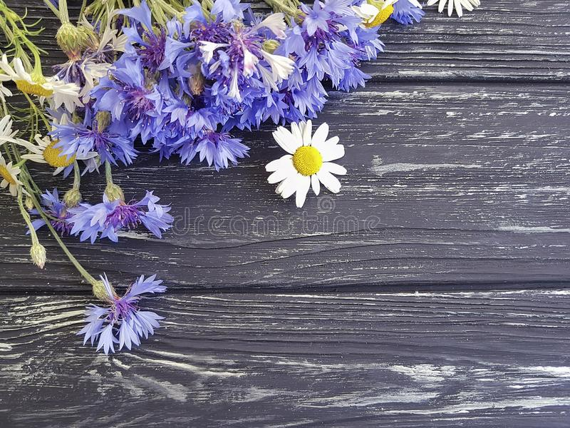 Bouquet of cornflowers, border daisy present petal natural chamomile on a black wooden background beauty royalty free stock photo