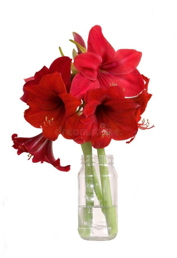 Bouquet d'amaryllis - isolement blanc photos stock