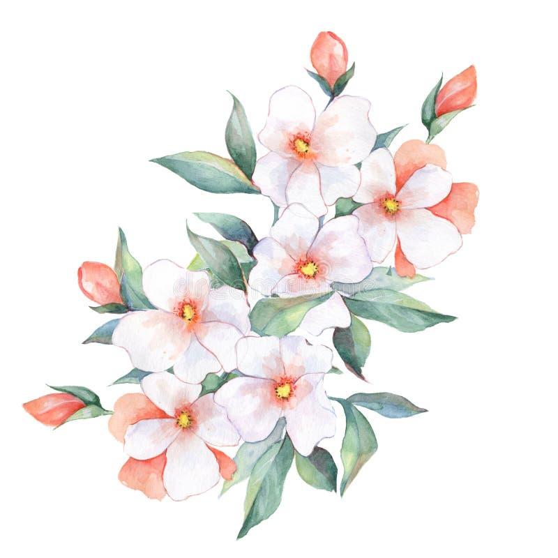 Bouquet d'aquarelle Fleurs blanches illustration stock