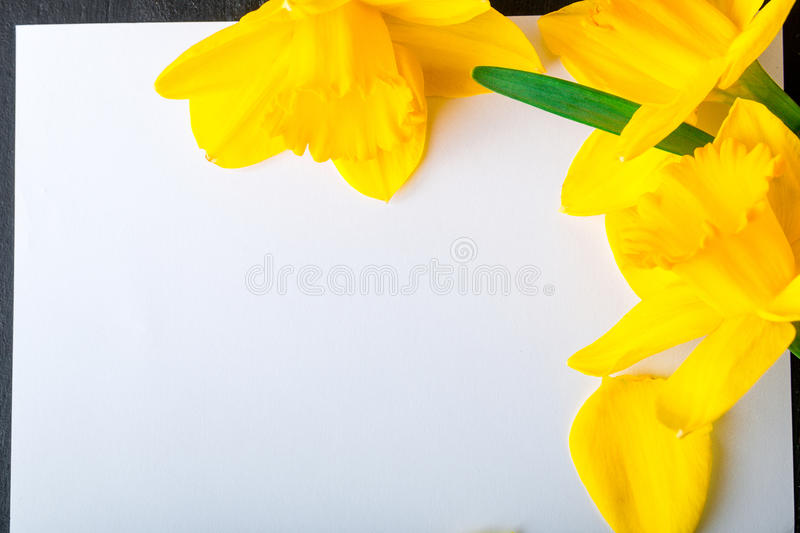Bouquet of daffodil near empty card on black background. Top view. Copy space. Mothers day or Womens day. Greeting. royalty free stock photos