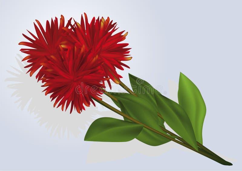 Bouquet a dahlia royalty free illustration