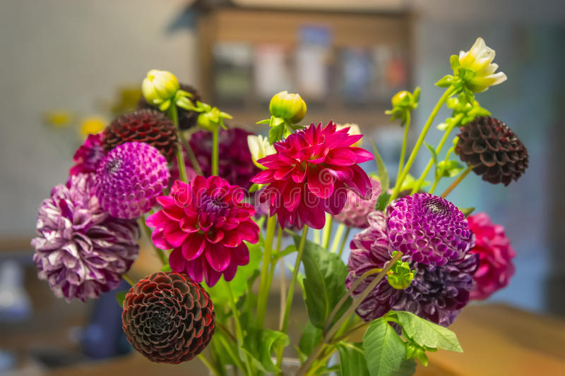 Bouquet of dahlias. royalty free stock image
