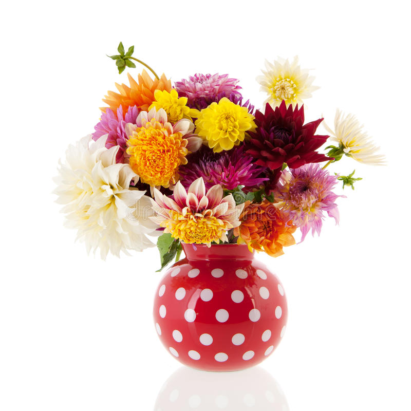 Bouquet Dahlias in red vase. Bouquet Dahlias in red spotted vase over white background stock images