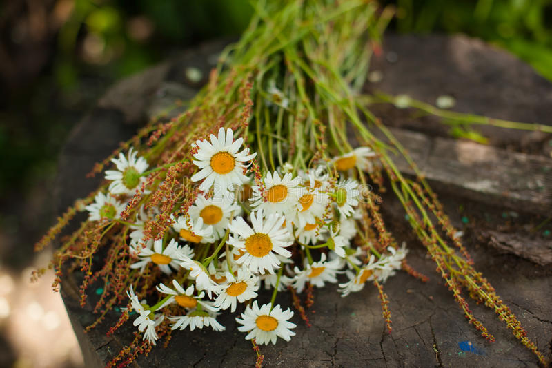 Bouquet of daisies on the stump stock images