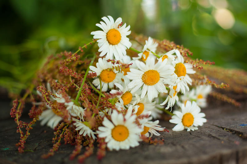 Bouquet of daisies on the stump stock photos