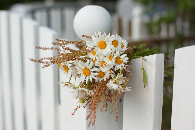 Bouquet of daisies on white wooden fence stock photography