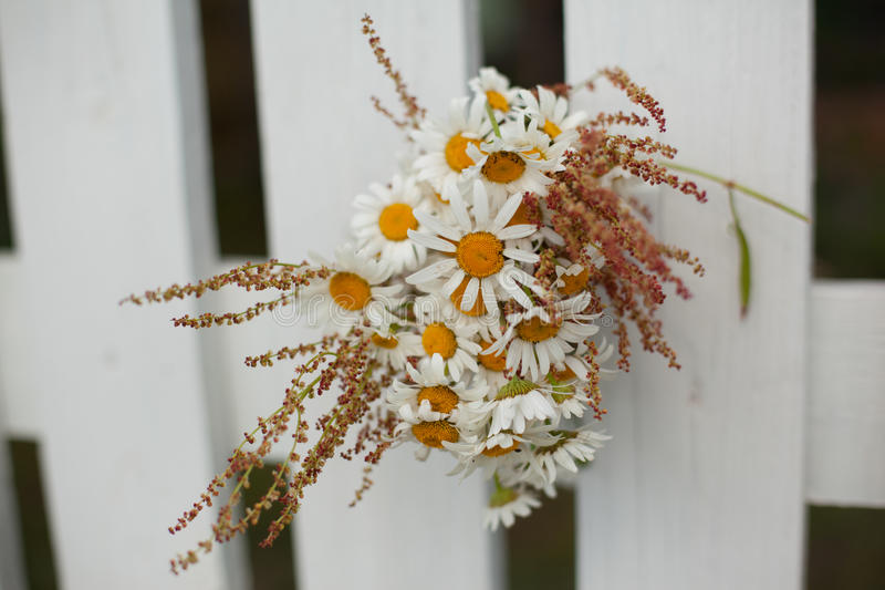 Bouquet of daisies on white wooden fence stock photos