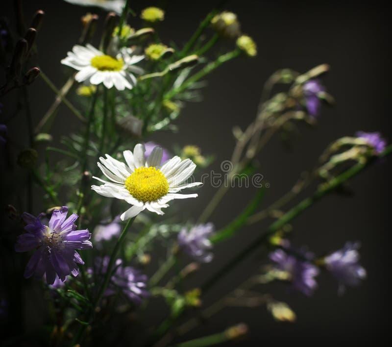 Bouquet of daisies stock photos