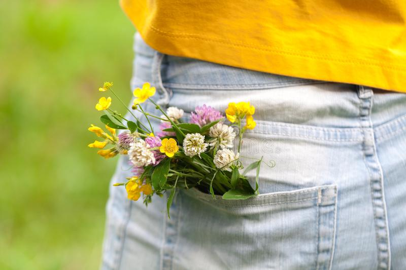 Bouquet of daisy in jean pocket stock photography