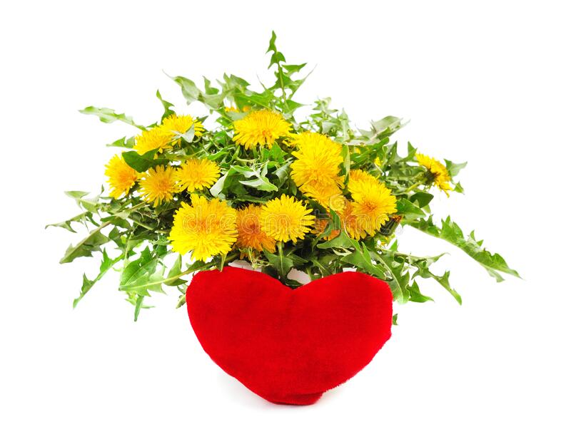 Bouquet of dandelion with heart royalty free stock image