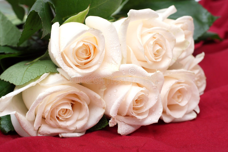 Bouquet das rosas de creme fotografia de stock