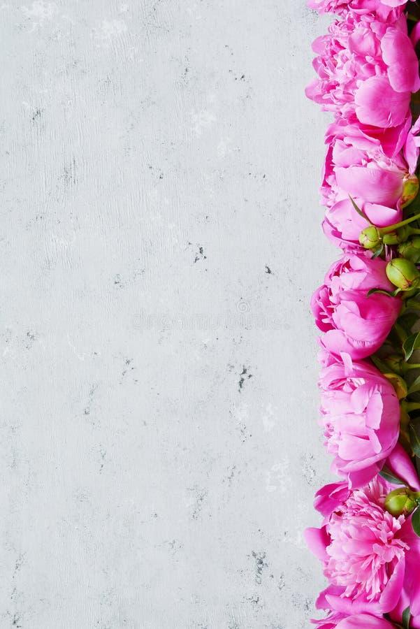 Bouquet de beaucoup de pivoines de fin rose de couleur  Configuration plate, vue supérieure Texture de fleur de pivoine Pivoines  images libres de droits