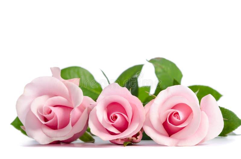 Bouquet de belles roses roses photographie stock