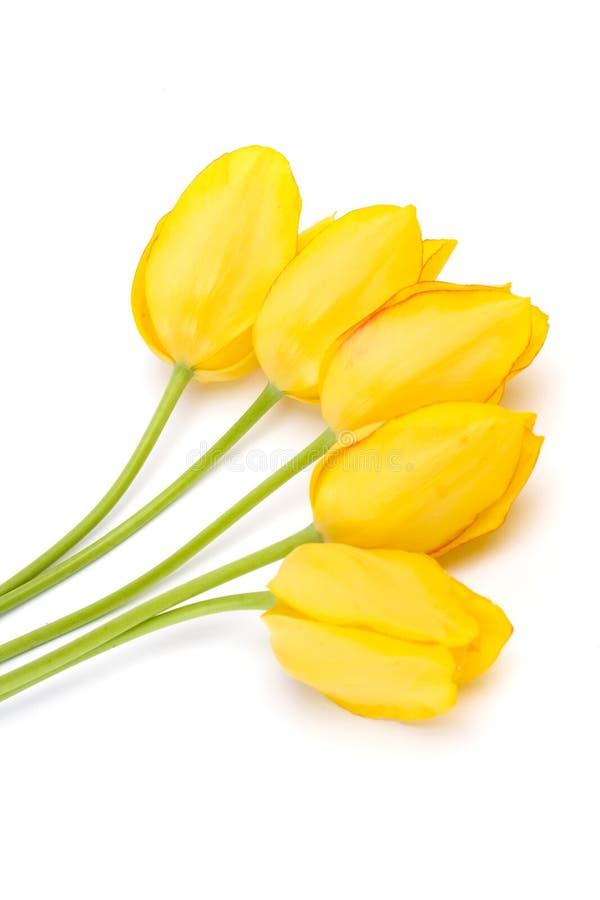 Bouquet de belles tulipes photos stock