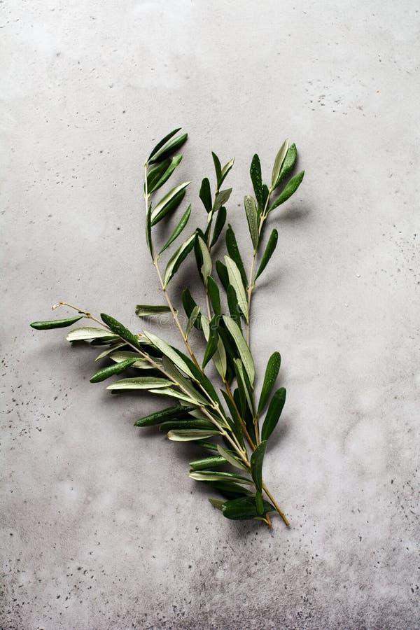 Bouquet de branches d'oliviers fraîches sur fond de béton gris vieilli image stock