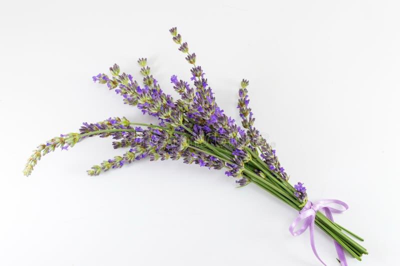 Bouquet de branches de fleur de lavande sur le blanc photos libres de droits