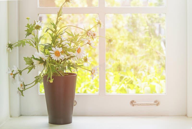 Bouquet de camomille dans le vase avec la lumière de la fenêtre photos libres de droits