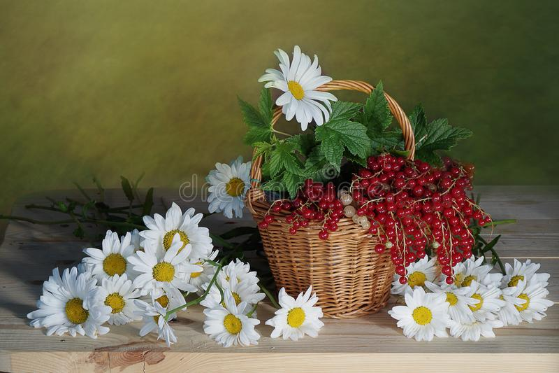 Bouquet de camomille et de groseille photos stock