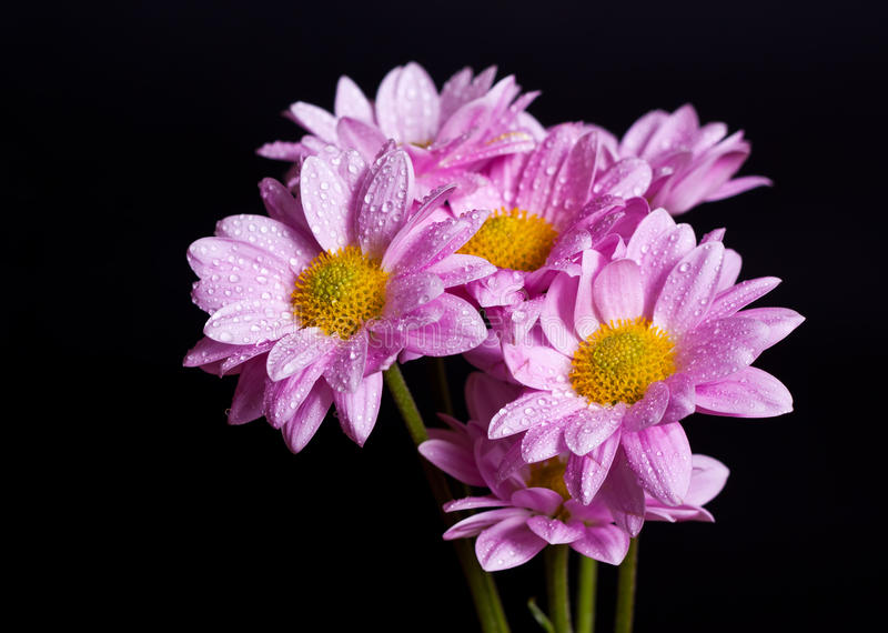 Bouquet de chrysanthemum photo stock