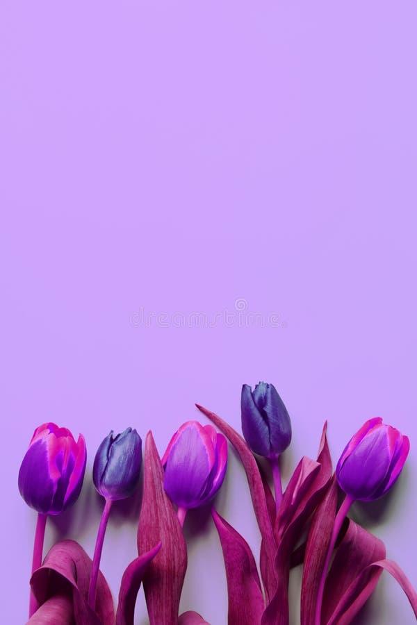 Bouquet de cinq tulipes violettes, pourpres et roses colorées sur le fond mauve-clair photo stock