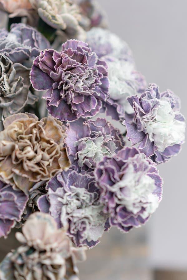 Bouquet de couleur peu commune de fleurs d'oeillet Fond de source Présent de groupe de clou de girofle pour le jour de mères image libre de droits