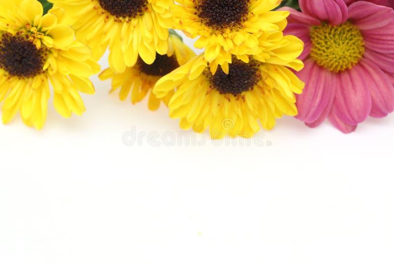 Bouquet de crisantemo en un fondo blanco fotografía de archivo libre de regalías