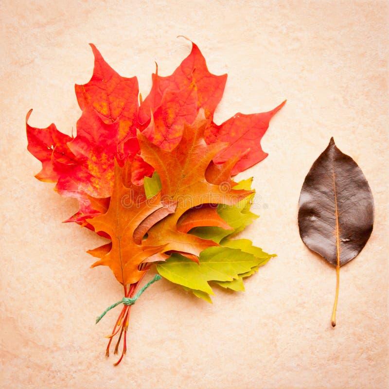 bouquet de feuilles d 39 automne sur le fond en pierre photo stock image du rouille color 31616416. Black Bedroom Furniture Sets. Home Design Ideas