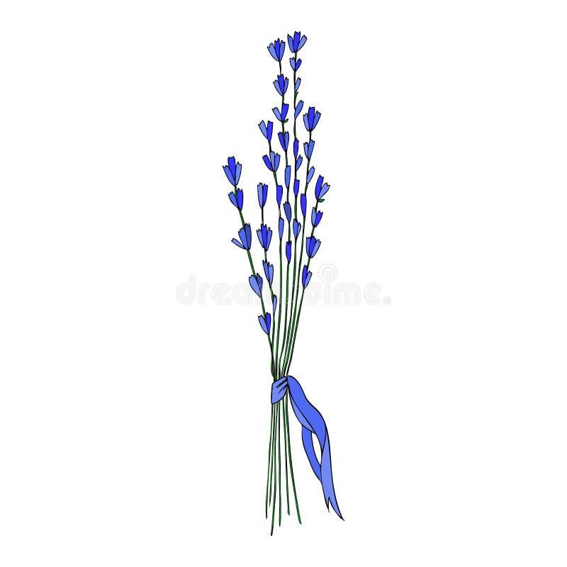 Bouquet de fleur de lavande avec le croquis tiré par la main de vecteur de ruban d'isolement sur l'illustration colorée florale d illustration stock