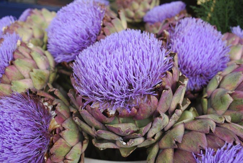 Download Bouquet De Fleur Pourpre D'artichaut Image stock - Image du légume, beau: 76085323