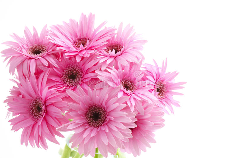 Bouquet de Gerbera images libres de droits