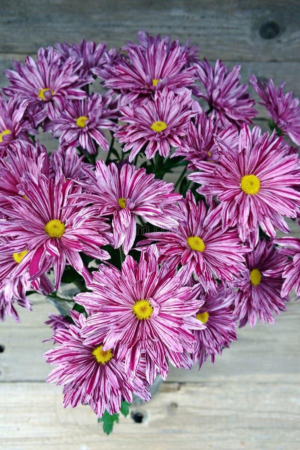 Bouquet de gerbera pourpre image stock