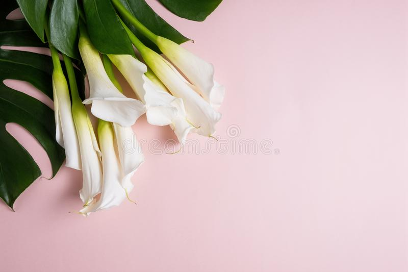 Bouquet de lírios brancos e folhas monstera em fundo cor-de-rosa com espaço de cópia, vista superior fotos de stock