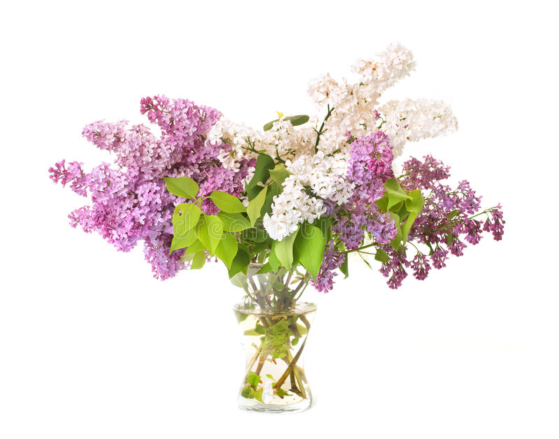 Bouquet de lilas photo stock
